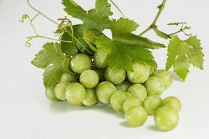 Érrendszer erősítő szőlőmagolaj a Mannavitától